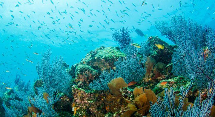 Corales, guardianes submarinos