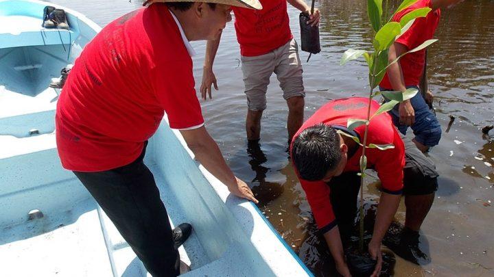 Reforestan con 126 mil árboles de mangle rojo en Oaxaca