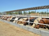 Impulsa Gobierno de Baja California a Sector Agropecuario