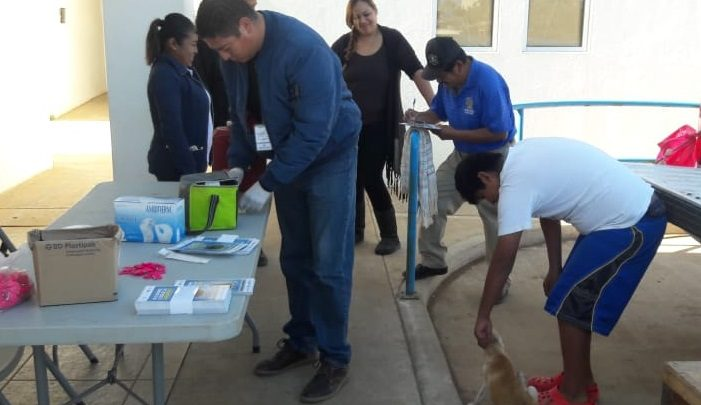 Fortalece Gobierno de Baja California acciones de prevención y control de la garrapata Café del Perro
