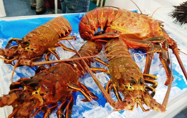 Reporta gobierno de Baja California capturas de langosta cercanas a 700 toneladas al cierre de la temporada