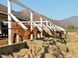 Respalda gobierno del estado a productores de Baja California
