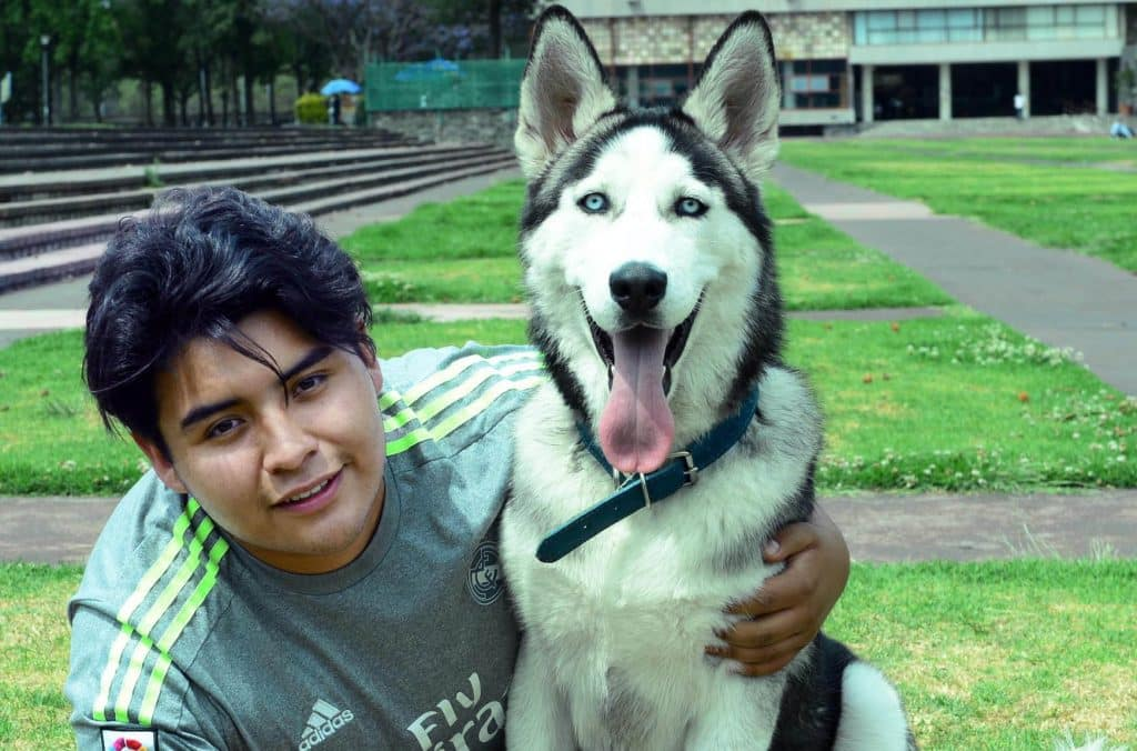 Los perros también sufren de ansiedad si su entorno no es el adecuado. Foto: UNAM