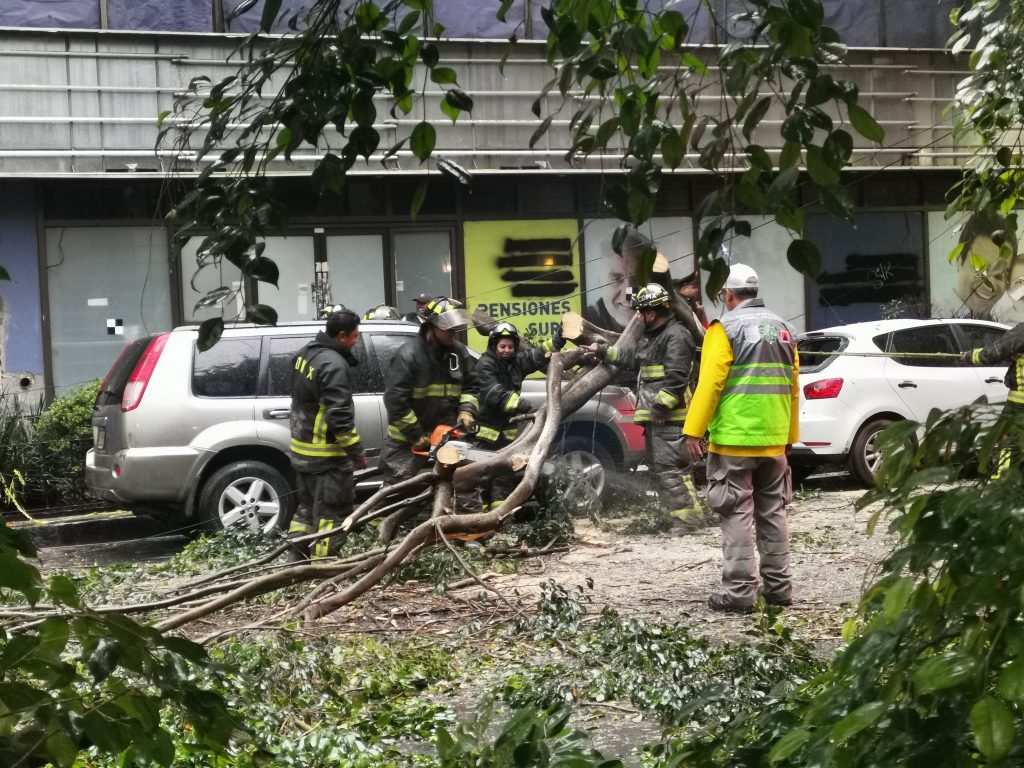 El árbol cayó sobre dos autos en la colonia Juárez. Foto: Twitter
