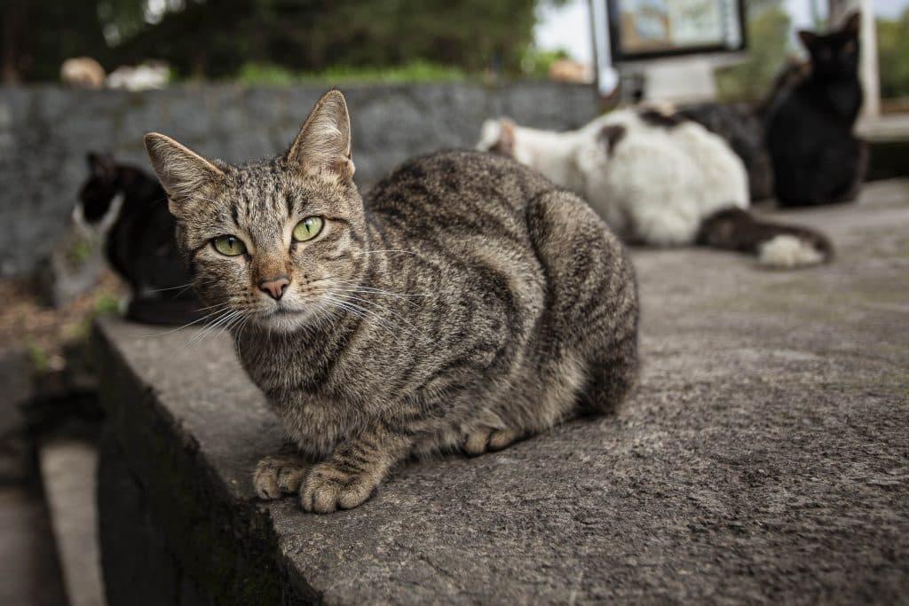 Los gatos son animales independientes. Foto: UNAM