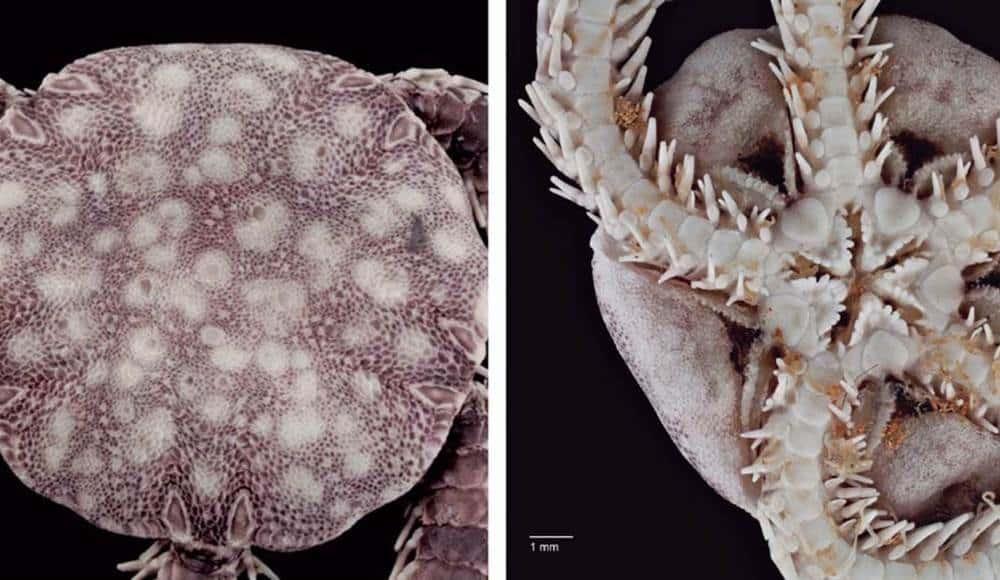 nueva especie marina cavernícola