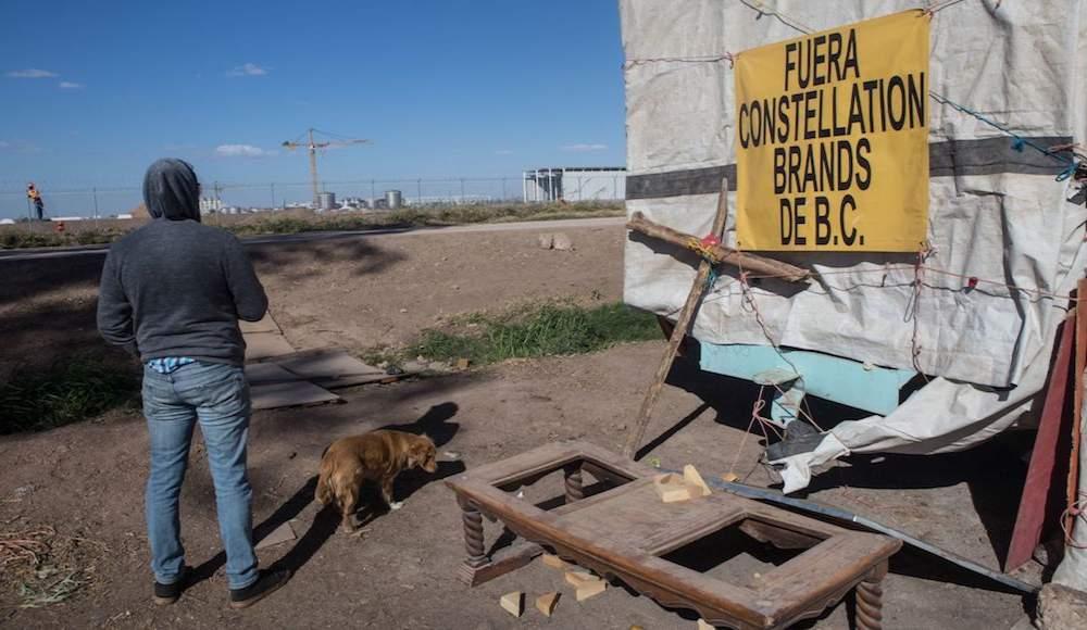 consulta sobre cervecera en Mexicali no se detiene