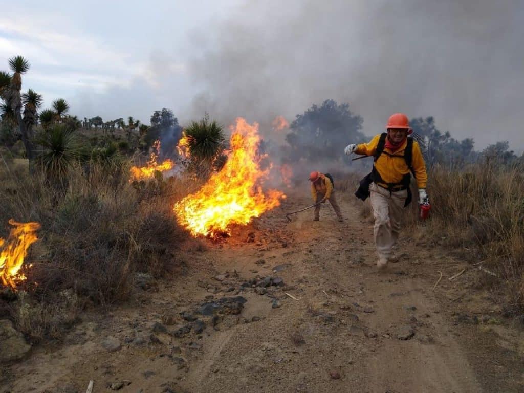 Incendios forestales en Veracruz son 83 hasta el momento